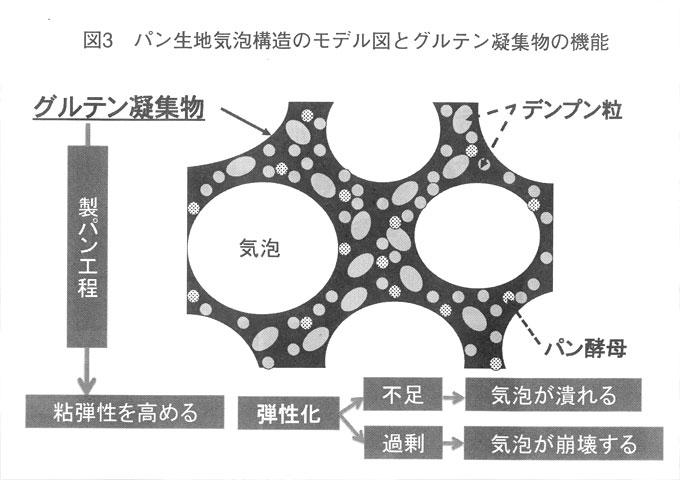 パン生地構造のモデル図