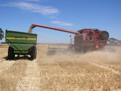 小麦の収穫風景