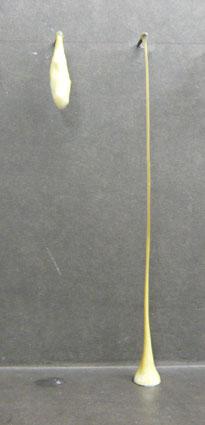 1等粉グルテン(左)と2等粉グルテン